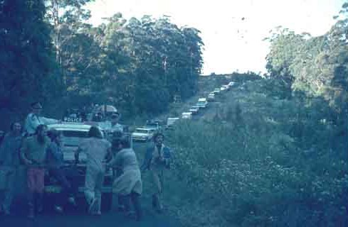 A long row of cars and protestors blockade a police and logging convoy in Nightcap forest in 1982.