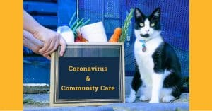 person delivering box that states 'Coronavirus and community care' filled with groceries and toilet paper to someone's front door with cat sitting beside box
