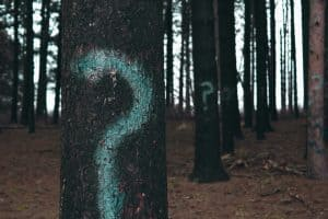 Trees in a forest with question marks painted on their trunks