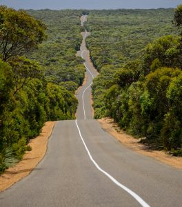 remote road surrounded by Australian bush on Kangaroo island