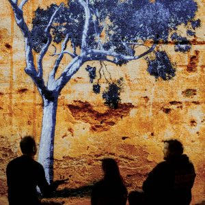 silhouette of three people sitting near gum tree